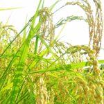 イネ科花粉症のピーク時期と症状や対策